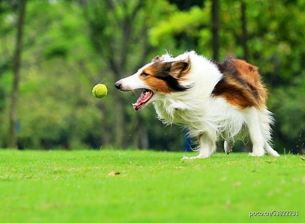 1.自分にとっての「テニスボール」を見つけよう