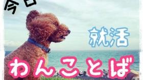 【9/30】今日のわんことば最終回 by.就活わんこ