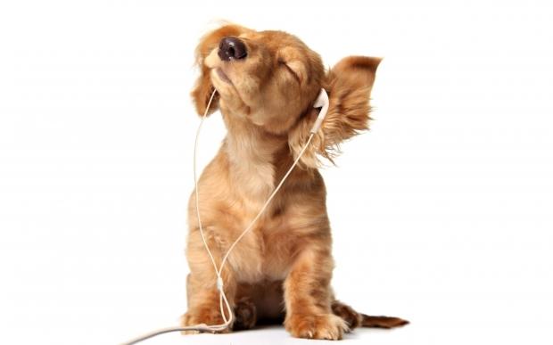 2:ノリノリな音楽をきく